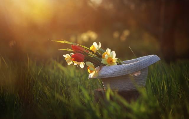 природа, весна, трава, шляпа, цветы, нарциссы, тюльпаны