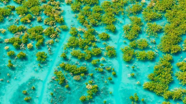 Австралія, затока, природа
