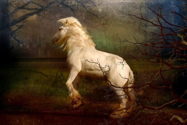 kůň, příroda