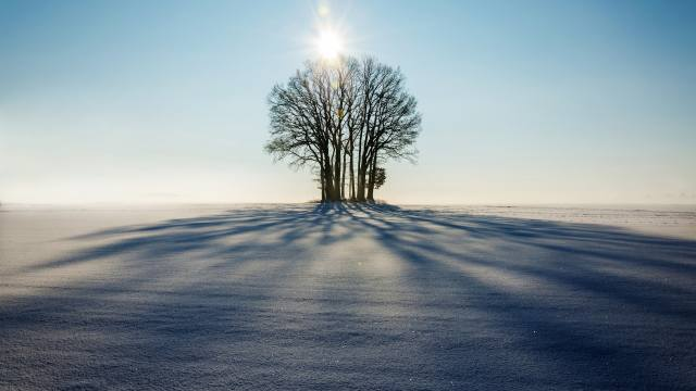 зима, деревья, солнце, тень, снег