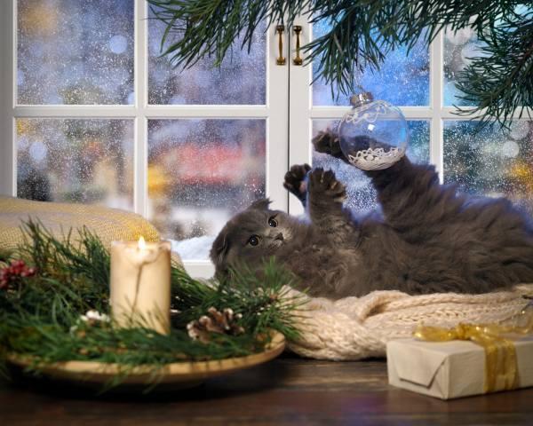 Животное, котенок, детеныш, ветки, ель, елка, игрушка, шар, праздник