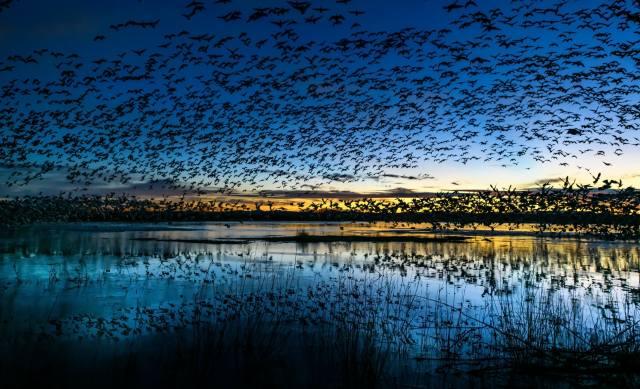 птицы, СТАЯ, природа, озеро