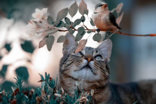 Тварина, кіт, кішка, погляд, природа, гілка, листя, пташка