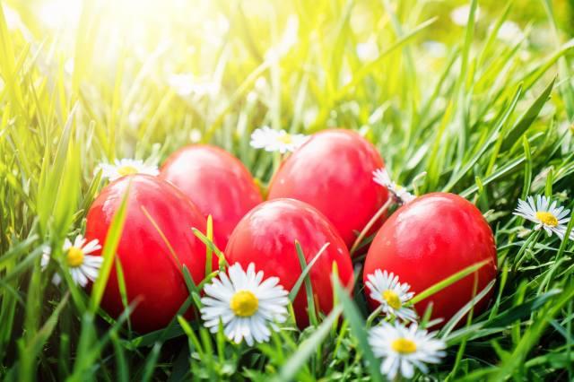 photo, spring, holiday