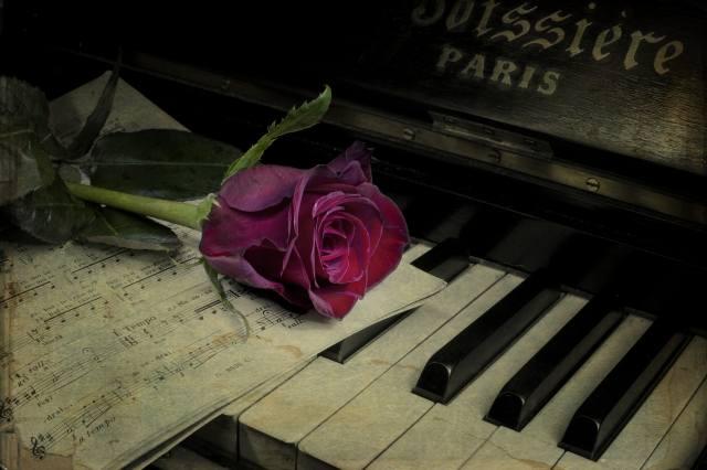 ноти, квітка, роза, піаніно