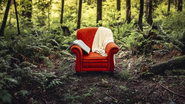 chair, nature, theme, photo, creative