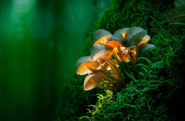 лес, грибы, фото, Adrian Borda, макро