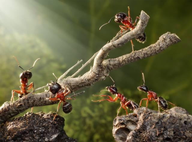макро, муравьи, камни, ветка, труд