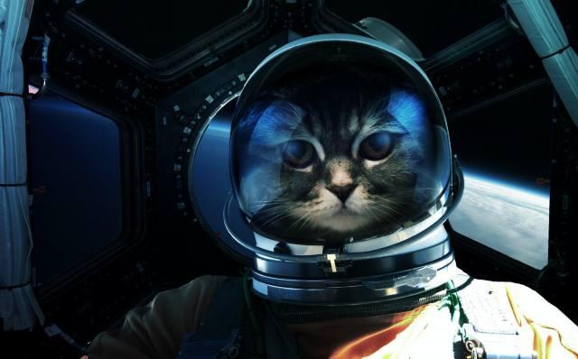 kočka, kosmonaut