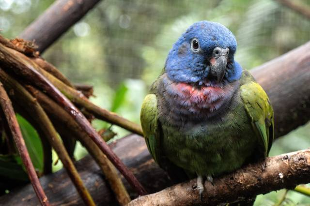 nature, birds of the world, bird, Parrot, branches