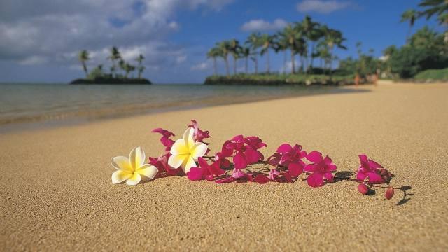 тропики, тропический, цветок, цветы, Орхидея, франжипань