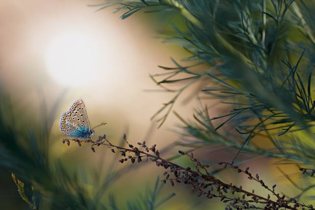 nature, summer, grass, twig, butterfly, macro