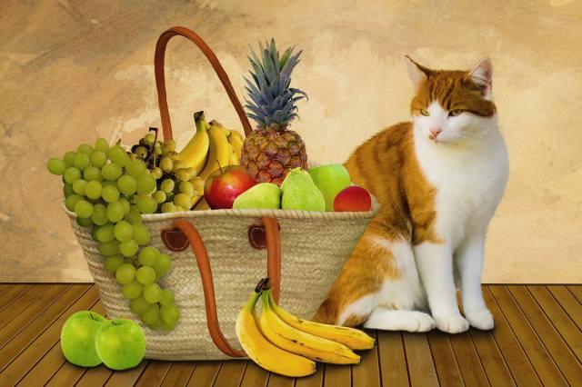 кошка, фрукты, корзина
