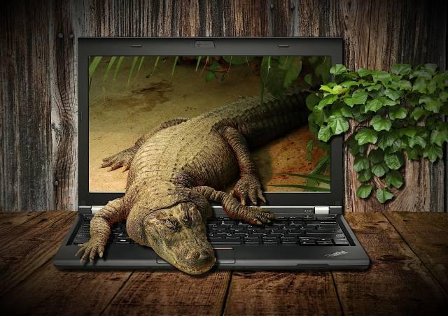Обои Crocodile, Fantasy, Notebook, zvíře, Workplace, Display, notebook, displej, Krokodýl