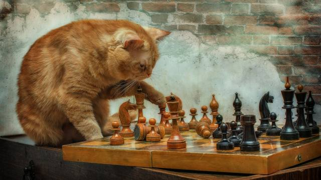 red, cat, plays, chess