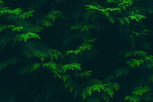 природа, темный фон