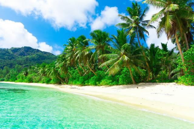 the sky, Карибский Бассейн, sea, palm trees, sand