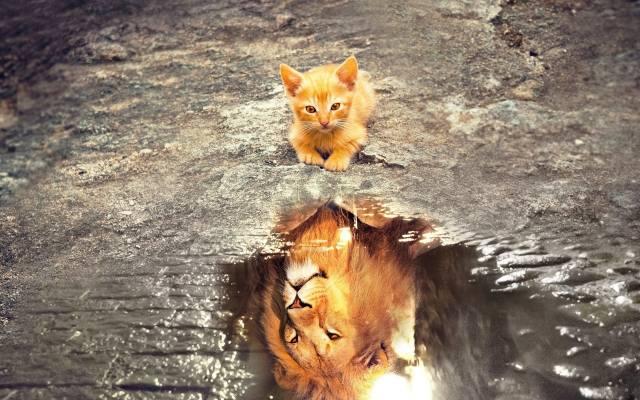 kitten, puddle, lion