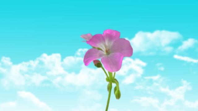 minimalism, flower, the sky, clouds