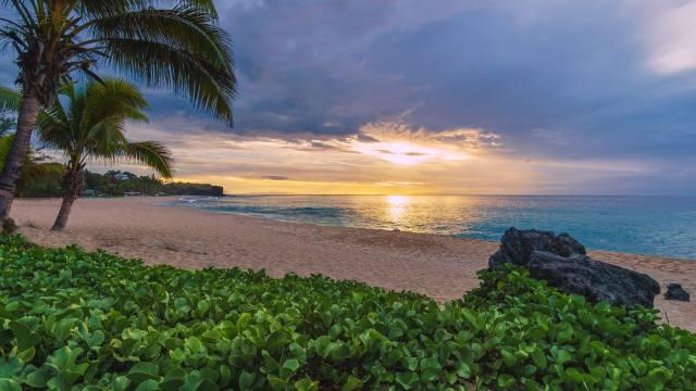 Indian ocean, Indian ocean, island, Реюньон, Reunion, island, the beach, palm trees, shore