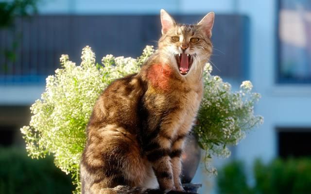 cat, flowers, Composition