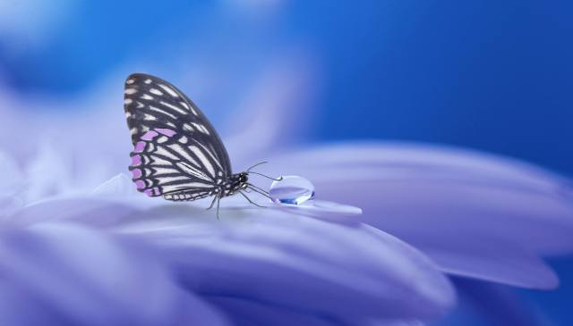 macro, flower, petals, insect, butterfly, drop, water