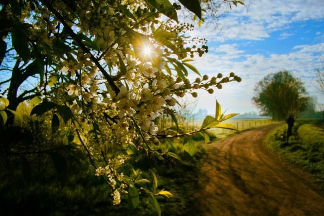 природа, весна, пейзаж, поле, дорога, ветка, цветы, цветение, солнце
