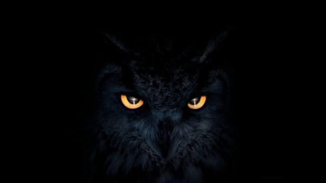 owl, dark