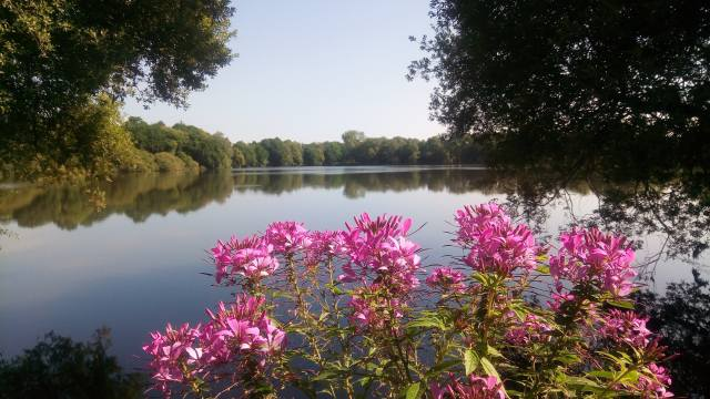 flowers, river, trees, summer