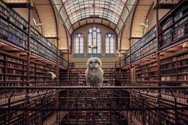 библиотека, книги, Сова, креатив