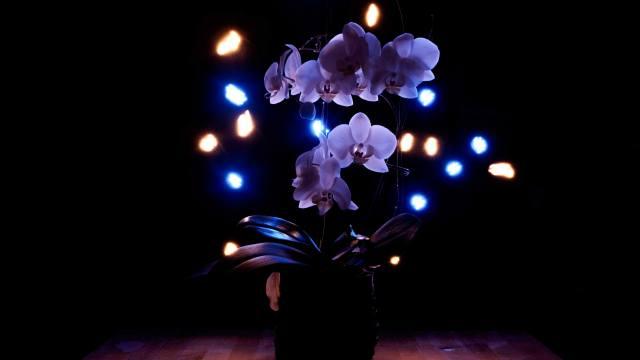 квітка, квіти, тропічний, экзотический, Орхідея