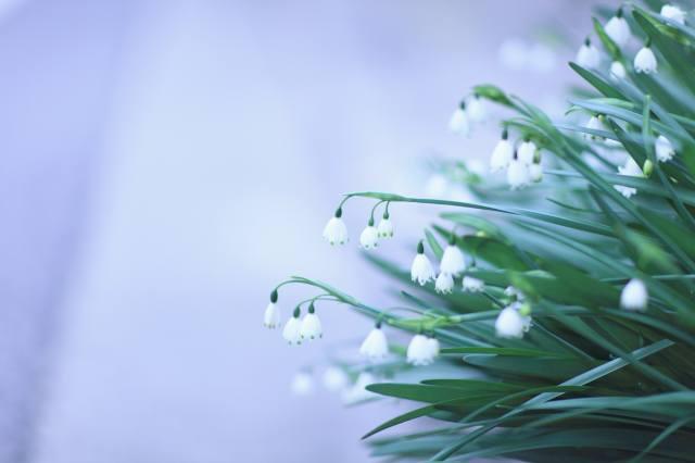 природа, весна, квіти, первоцвіти, проліски, листя