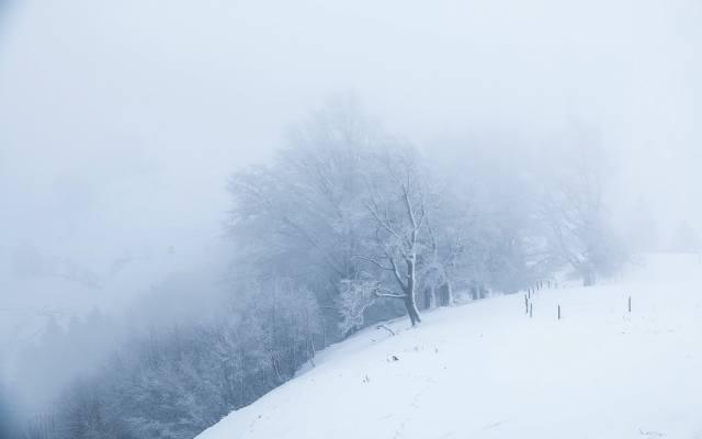snow, белый мир, trees, fog, morning, winter