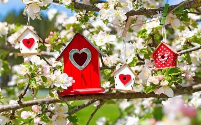 nature, spring, branches, Apple, flowering, birdhouse