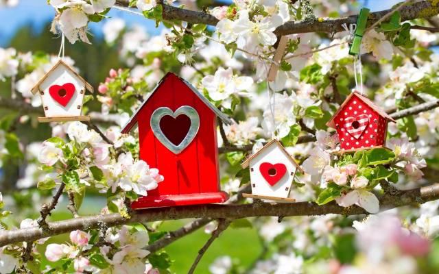 природа, весна, гілки, яблуня, цвітіння, шпаківня