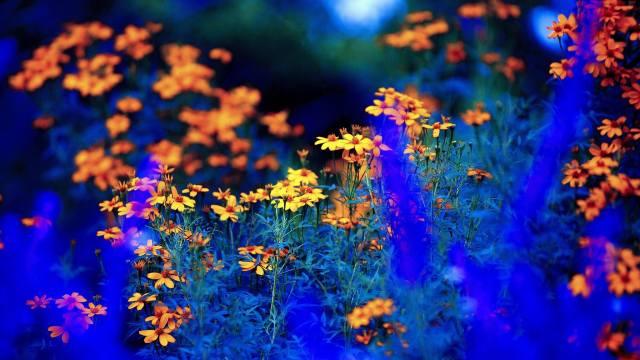 Желтое на синем, цветы