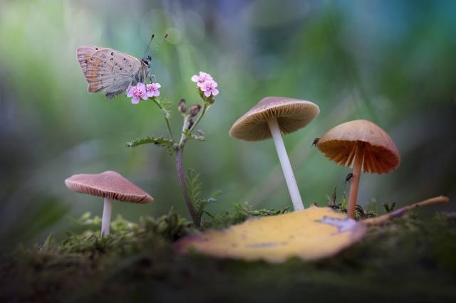 цветок, макро, природа, лист, бабочка, грибы, мох, поганки, боке