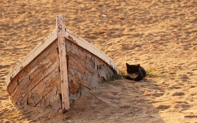 маленький, черный, котенок, на песке, у старой лодки