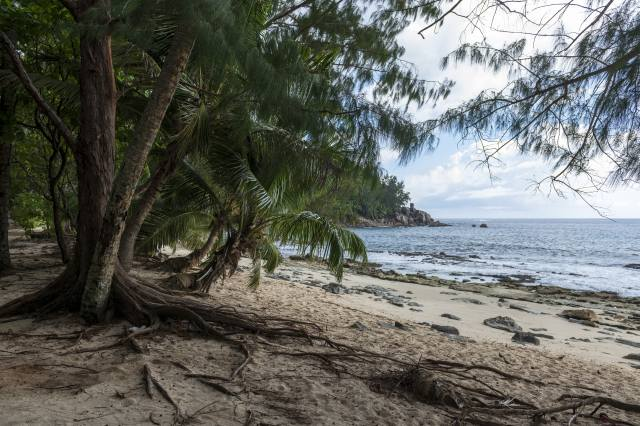 tropics, shore, coast, Police Beach Seychelles, palm trees, the beach, nature