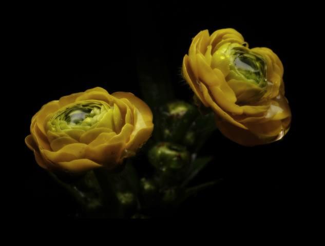 flowers, background, dark, minimalism