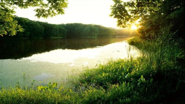 river, greens, summer