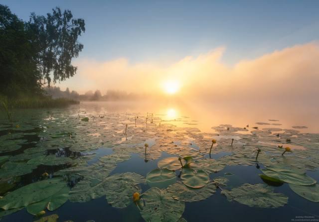 ráno, říčka, lekníny, mlha, svítání, foto, Андрей Олонцев