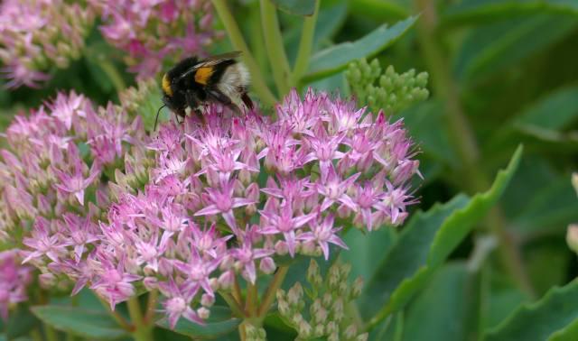 bee, flowers, leaves, bokeh