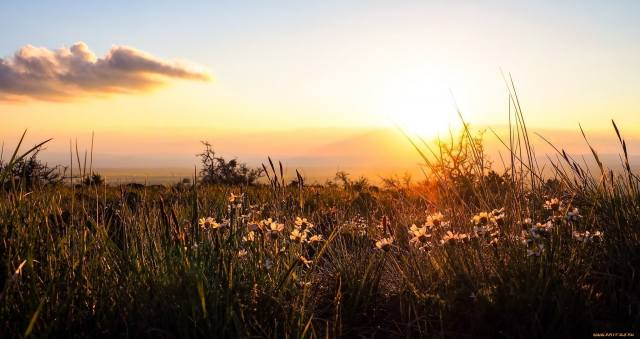bylinky, květiny, nebe, slunce, svítání, ráno