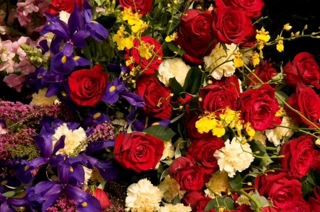 flowers, irises, rose