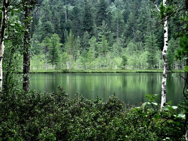 nature, landscape, summer, the pond, water, forest, trees, birch