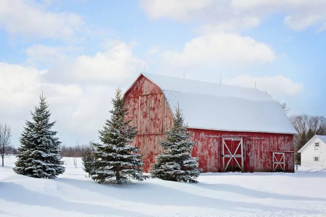 поле, здание, ели, снег