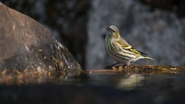 Sparrow, bird, macro