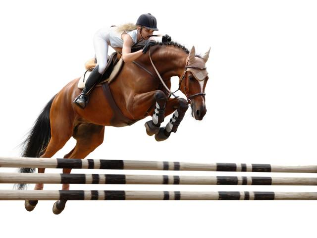 horse riding, jump, white, background, sports