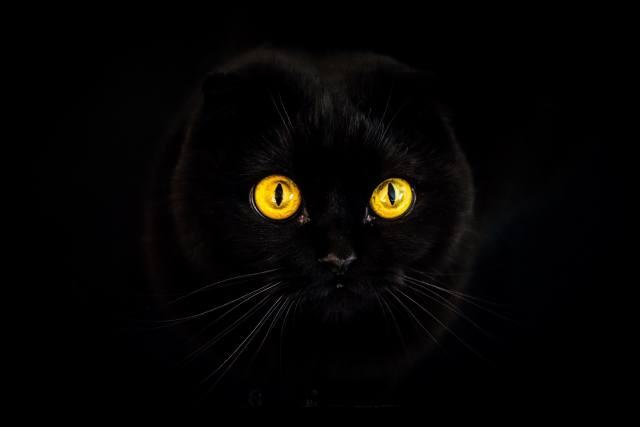 кот, морда, глаза, фон